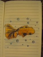Japanese Fish Doodle by Miss-Fantayjah