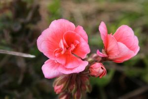 flower7 by KnB-Stock