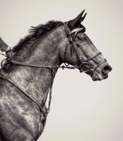 FEI  World Cup Qualifier by EquusAustralia