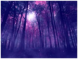 Magic Forest by chullo