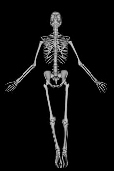 Skeleton 2 by SB-Photography-Stock