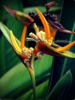 Flower One. by c-repuscolo