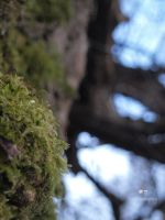 Mossy tree 1 by SusuSketches