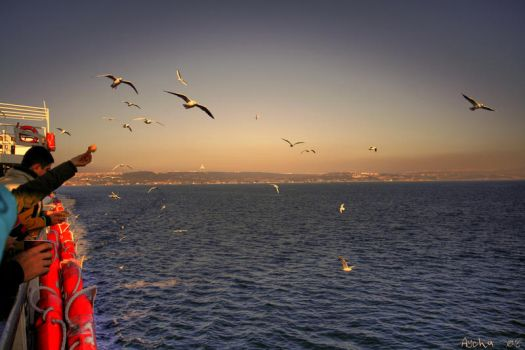 Feery with gulls by aychlq