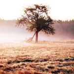.: sunrise tree :. by all17