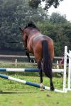 bay mare - jumping back view - stock by s-uperflu0us