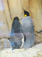 Rockhopper and King Penguin by Kitteh-Pawz
