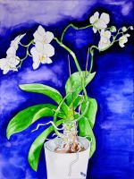 orchid by HappySchizophrenic