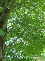 Tree Stock 18 by Orangen-Stock