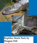 Reptiles Stock Pack by dragon-orb