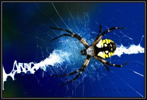 spider by RichardRobert