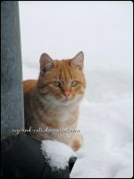 731 by evy-and-cats