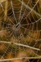 All perled cobweb by steppeland