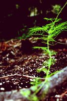 Growing by treyk4