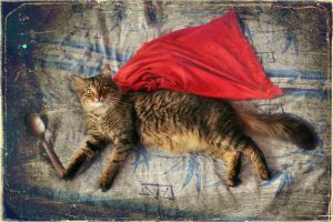 Supercat hurries to the kitchen! by yilkinson