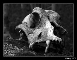 Death Naturally by dugonline