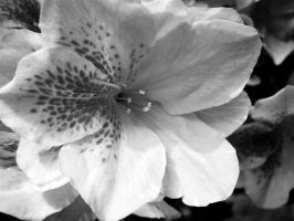 Black and White Flower 2 by meguida