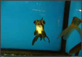 Fish Stock 0081 by phantompanther-stock