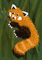 The Red Panda by zookydragon