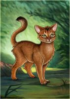Abyssinian Warrior Cat - Avatar by Wynnyelle