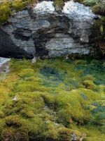 moss and rocks by LucieG-Stock