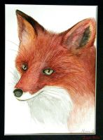 Fox Pen and ink wash by Lithe-Fider