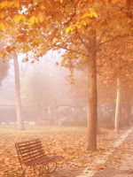 Foggy Fall by melir