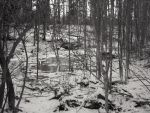 Winter Woods by olivia808