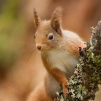 Inquisitive by Jamie-MacArthur