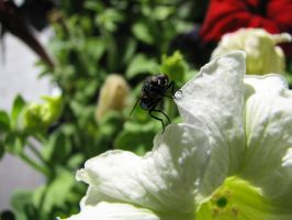 Fly on Flower 02 by LithiumStock