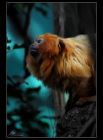 golden lion tamarin by sicknonsens