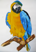 parrot by real-live-lover