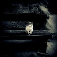 Petra Cat by lostknightkg