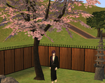 Hakuouki Sims - Saito under the sakura tree by elbrethali