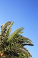 Summer Palm Trees 3 by photohouse