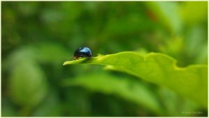 a bug's life by praveen3d