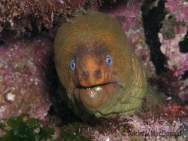 Yellow Moray by upthewalls
