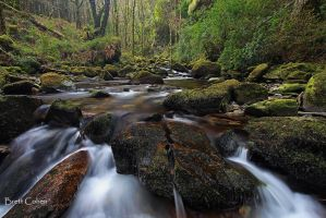 Killarney National Park, by Brettc