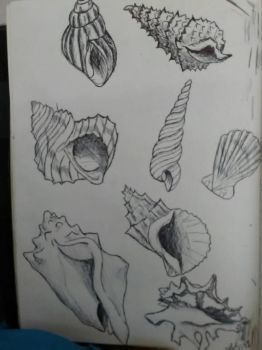 Shell study by Spinian