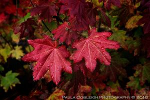 Wet Autumn Leaves by La-Vita-a-Bella