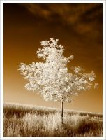 small oak tree -ir- by neoloonatic