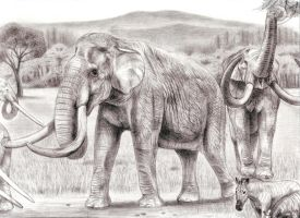 Southern Mammoth from latest Pliocene interglacial by Jagroar