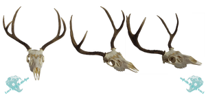 Mule deer skull stock by Lord-FurFur