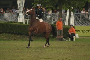 bay removed tack by suuslovertje