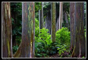 Rainbow Forest by aFeinPhoto-com