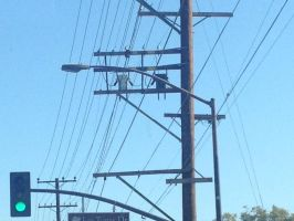 2 Robots Hanging Out On A Power Pole by Striker-X