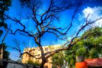 New Delhi Tree by Triadasoul