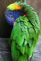 Preen wing by Reixed by Zoo-photographers
