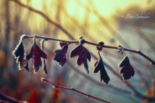 The last colours. by Phototubby