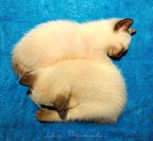 sleeping kittens by lidia-art